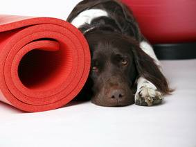 HUNDEPHYSIOTHERAPIE